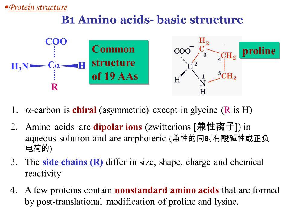 B1 Amino acids- basic structure