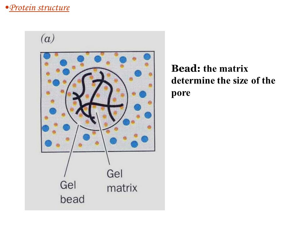 Protein structure Bead: the matrix determine the size of the pore