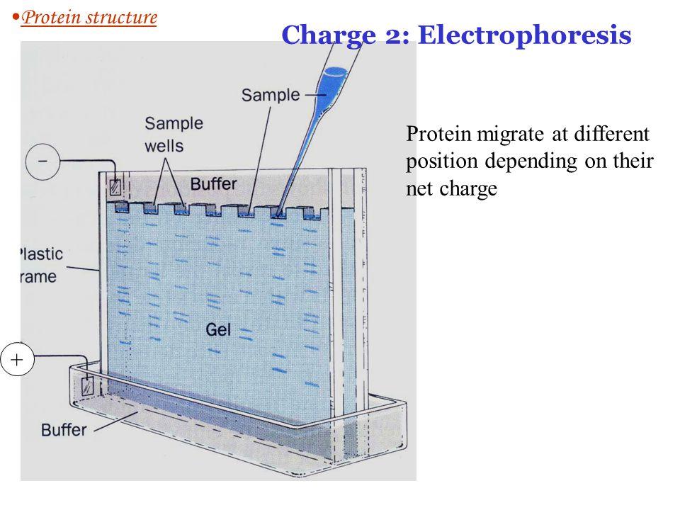 Charge 2: Electrophoresis