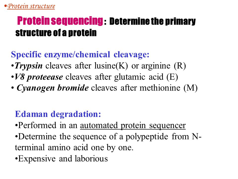Protein sequencing : Determine the primary structure of a protein