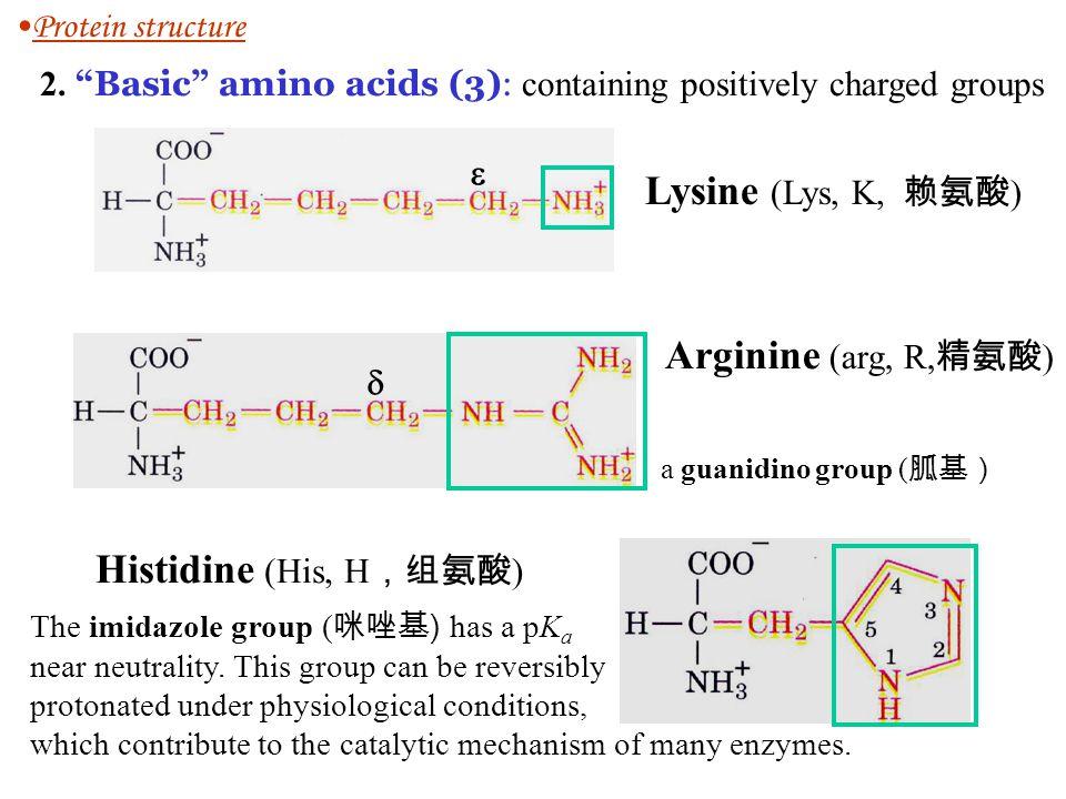 Lysine (Lys, K, 赖氨酸) Arginine (arg, R,精氨酸) Histidine (His, H,组氨酸)