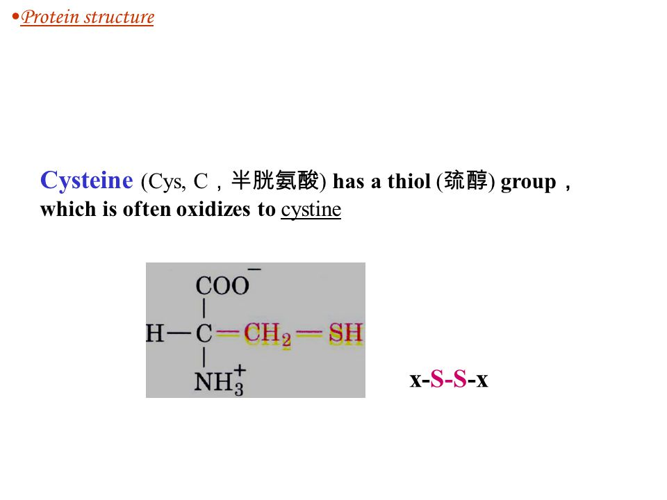Protein structure Cysteine (Cys, C,半胱氨酸) has a thiol (巯醇) group, which is often oxidizes to cystine.