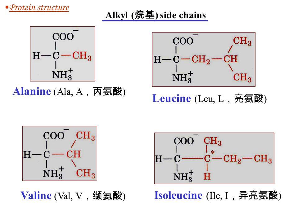 Isoleucine (Ile, I,异亮氨酸)