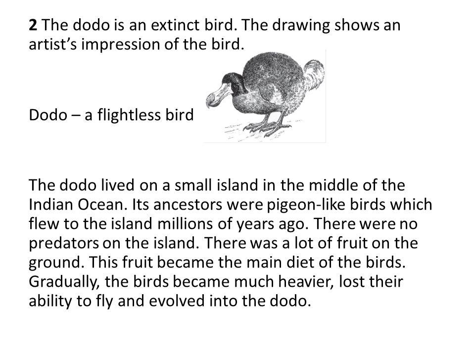 2 The dodo is an extinct bird
