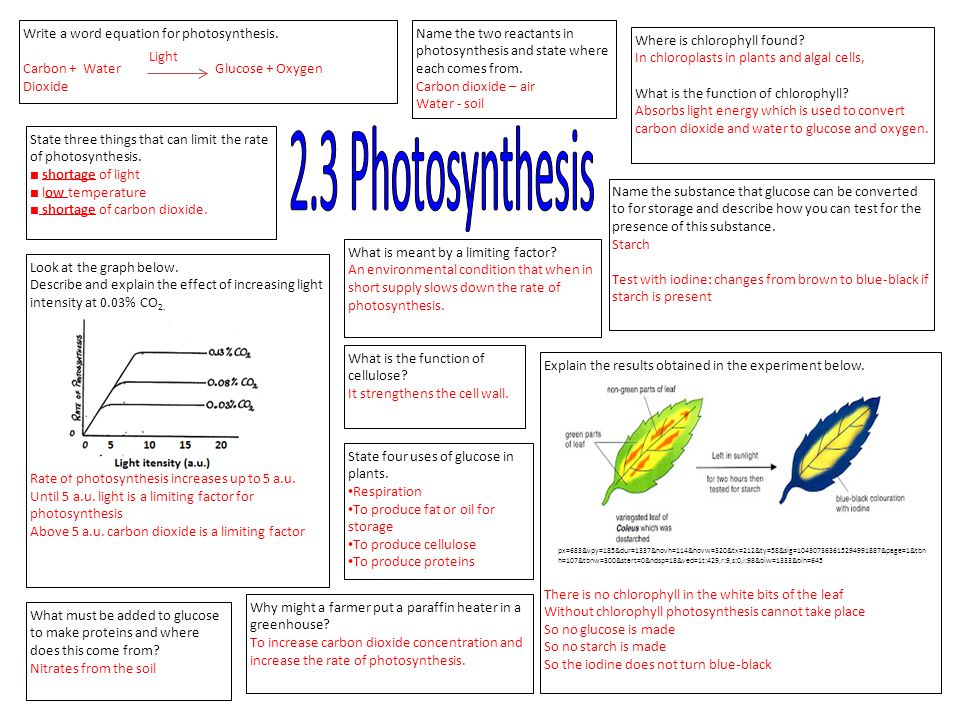 2.3 Photosynthesis Write a word equation for photosynthesis.
