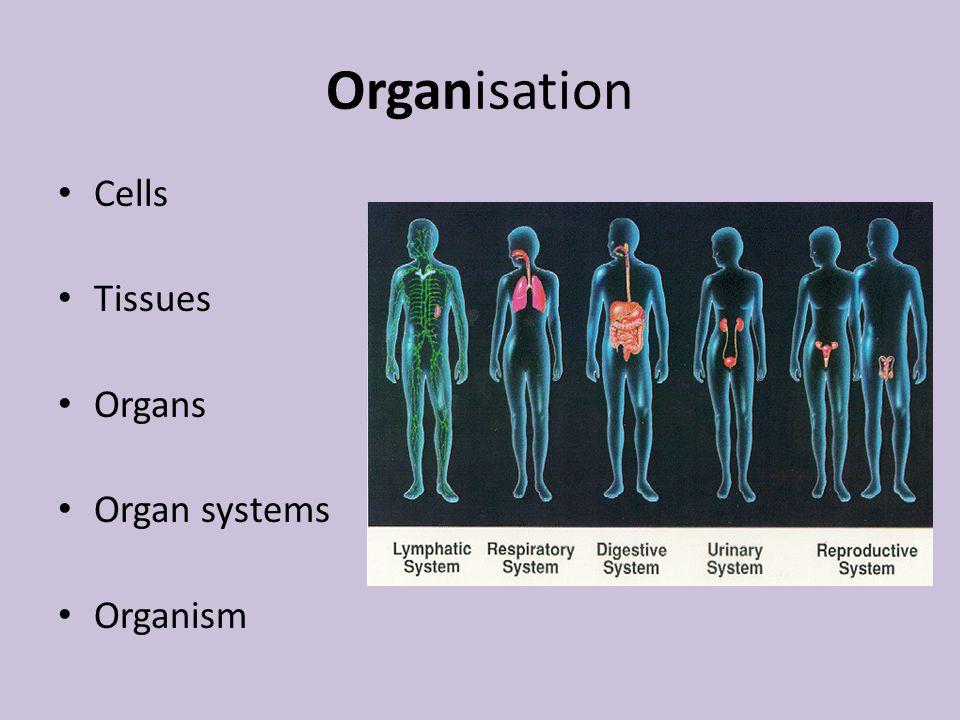 Organisation Cells Tissues Organs Organ systems Organism