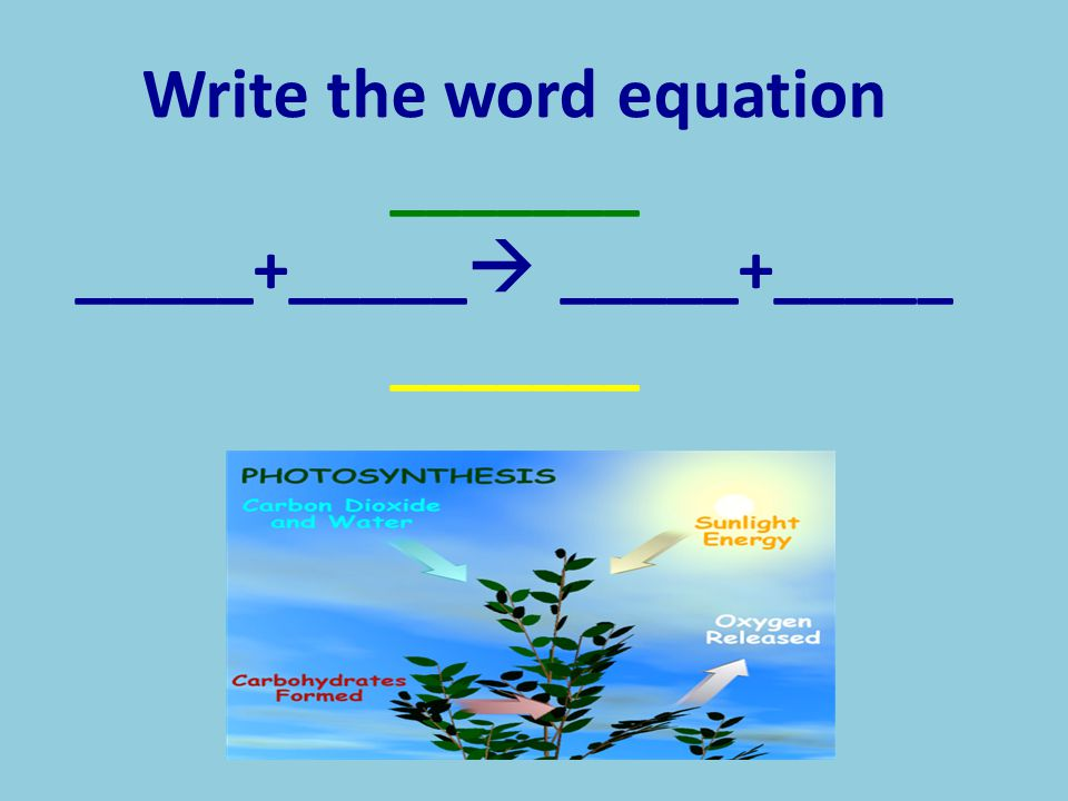 Write the word equation _______ _____+_____ _____+_____ _______