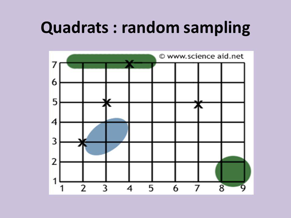 Quadrats : random sampling