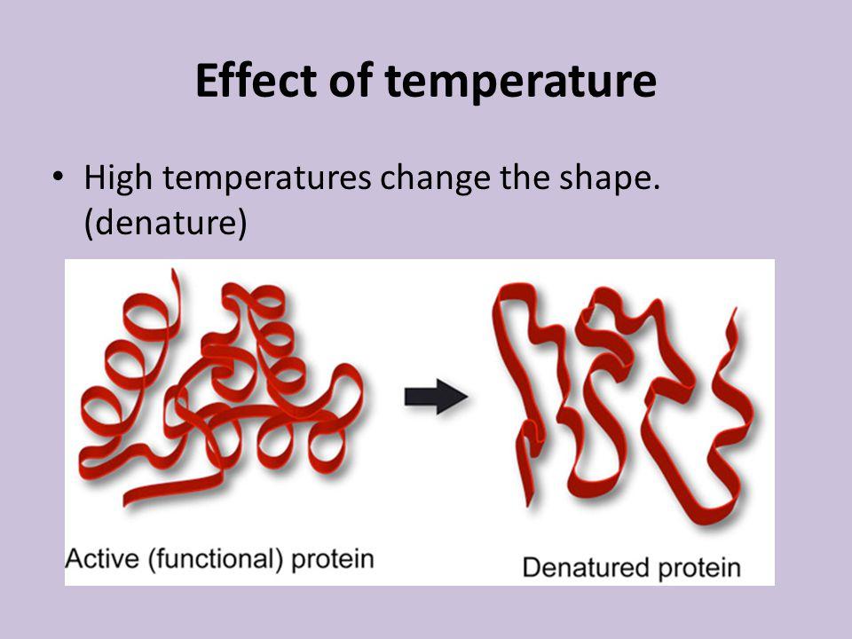 Effect of temperature High temperatures change the shape. (denature)