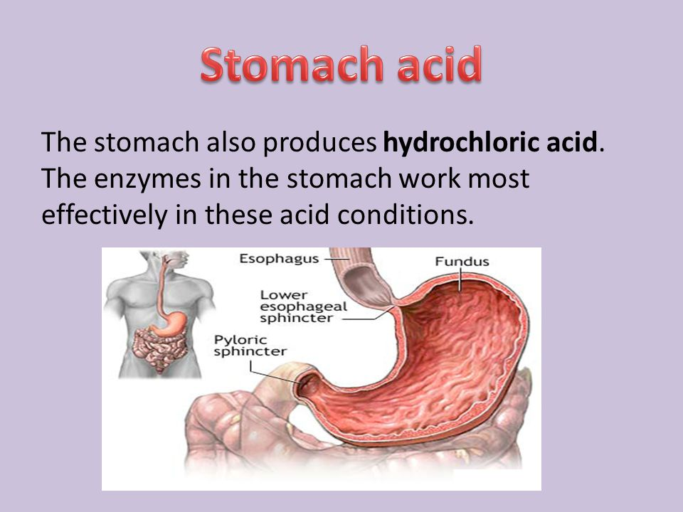 Stomach acid The stomach also produces hydrochloric acid.