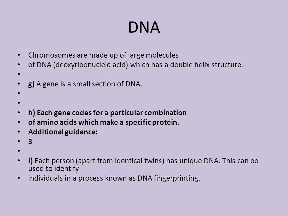DNA Chromosomes are made up of large molecules