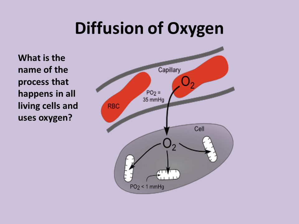 Diffusion of Oxygen What is the name of the process that happens in all living cells and uses oxygen