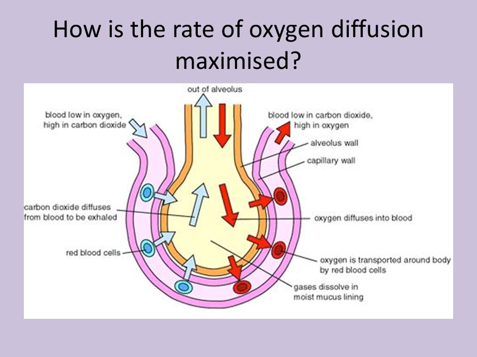 How is the rate of oxygen diffusion maximised