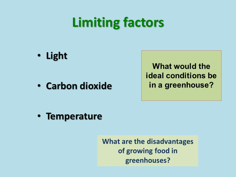 Limiting factors Light Carbon dioxide Temperature