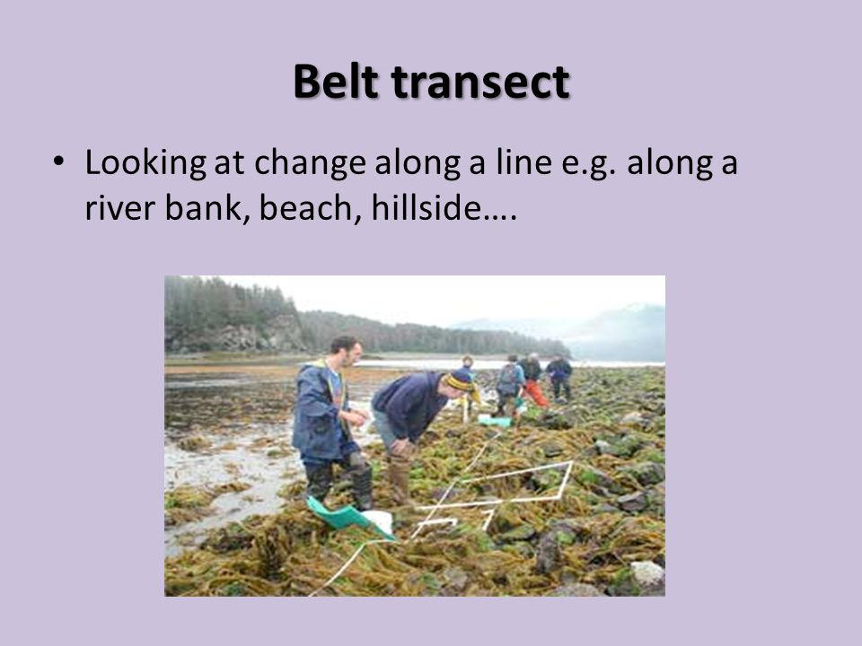 Belt transect Looking at change along a line e.g. along a river bank, beach, hillside….