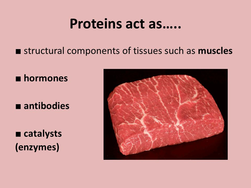 Proteins act as….. ■ structural components of tissues such as muscles