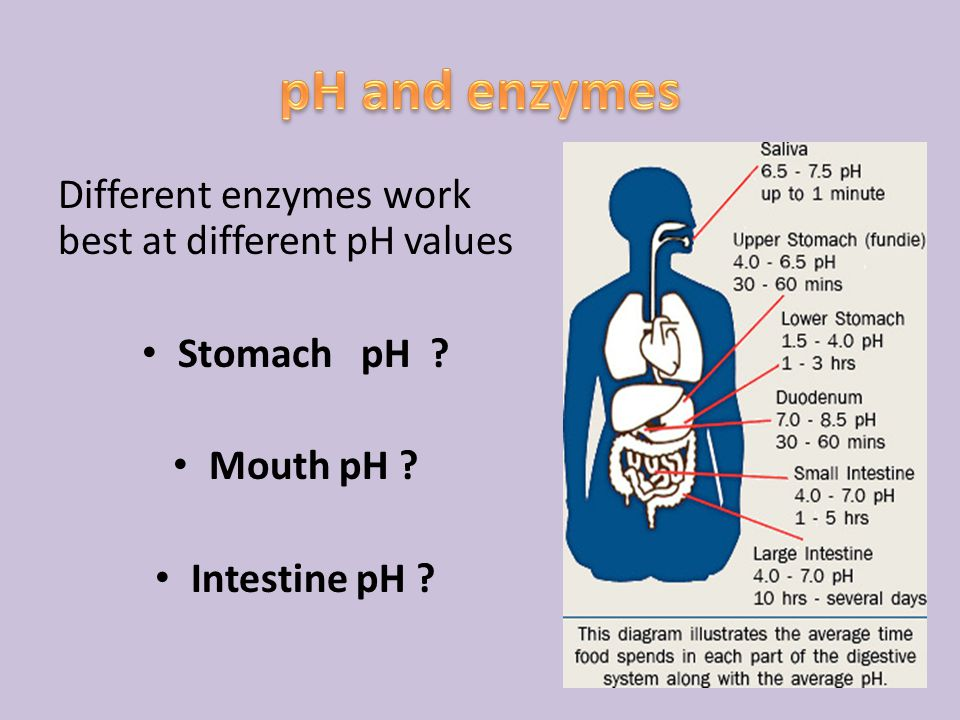 pH and enzymes Different enzymes work best at different pH values