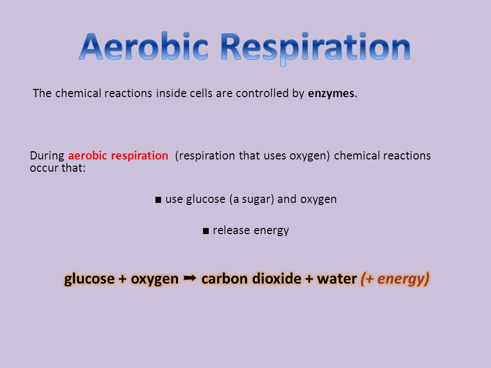 glucose + oxygen ➞ carbon dioxide + water (+ energy)