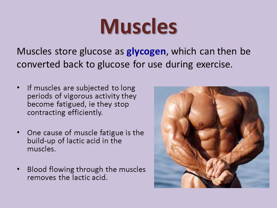 Muscles Muscles store glucose as glycogen, which can then be converted back to glucose for use during exercise.
