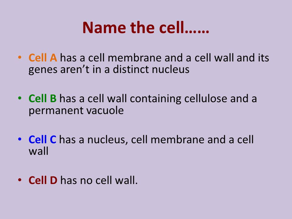 Name the cell…… Cell A has a cell membrane and a cell wall and its genes aren't in a distinct nucleus.