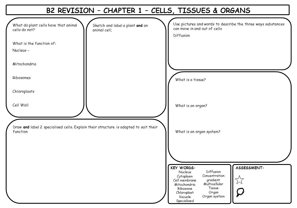 B2 REVISION – CHAPTER 1 – CELLS, TISSUES & ORGANS