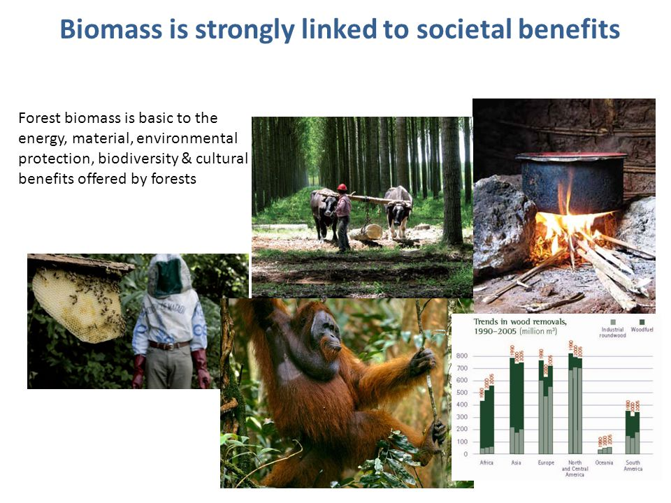 Biomass is strongly linked to societal benefits