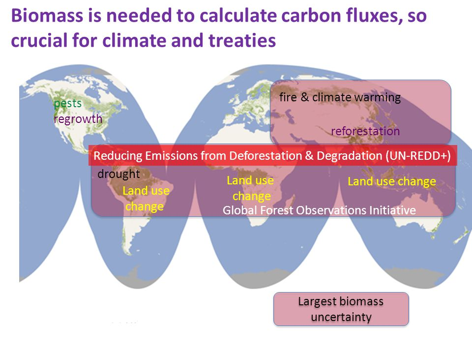 Largest biomass uncertainty