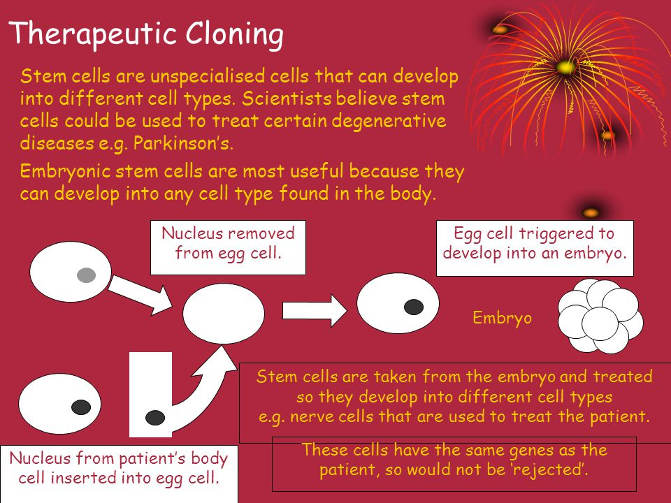 Therapeutic Cloning
