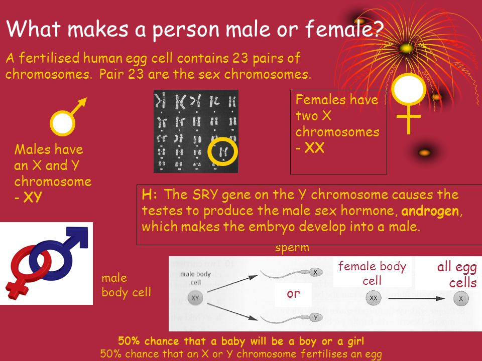What makes a person male or female