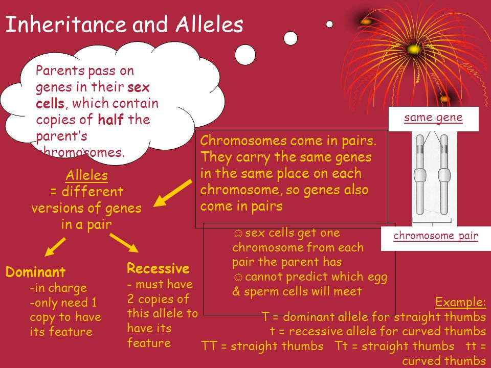 Inheritance and Alleles