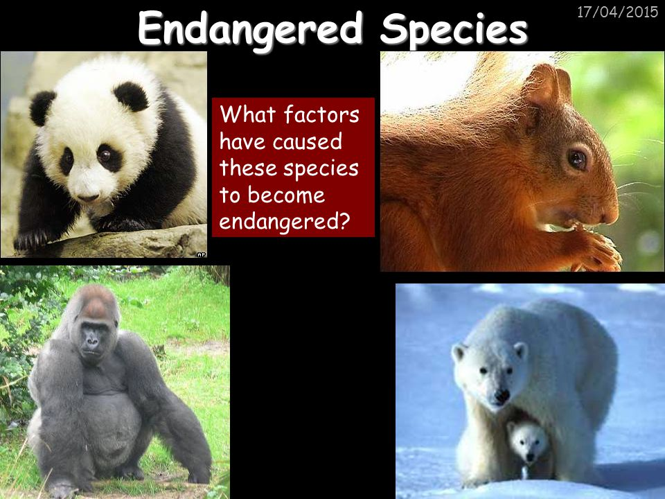 Endangered Species 11/04/2017 What factors have caused these species to become endangered