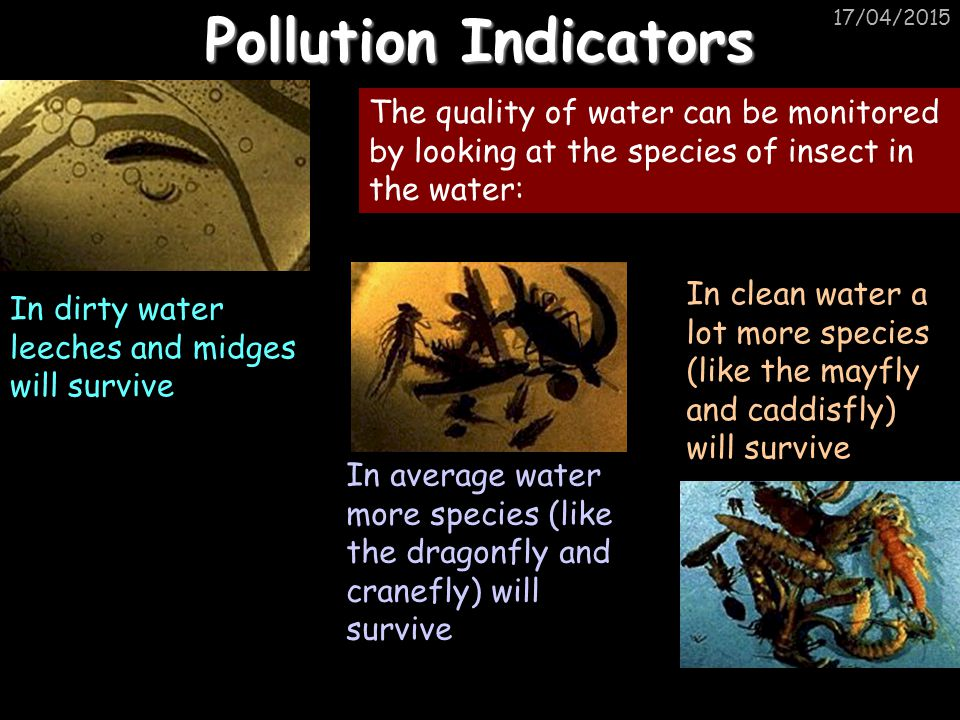 Pollution Indicators 11/04/2017. In dirty water leeches and midges will survive.