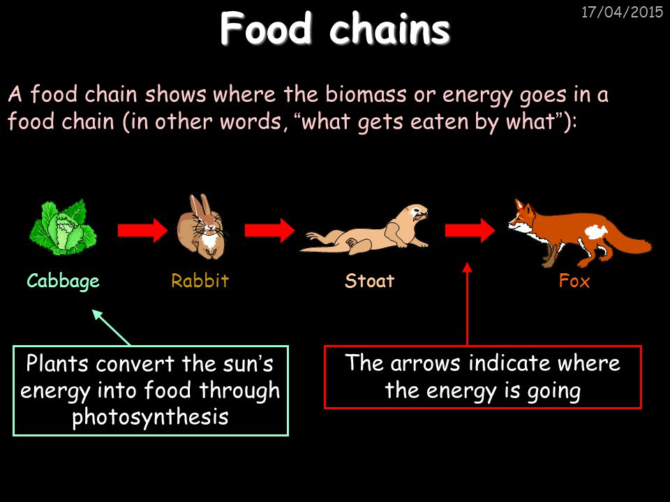 Food chains 11/04/2017. A food chain shows where the biomass or energy goes in a food chain (in other words, what gets eaten by what ):