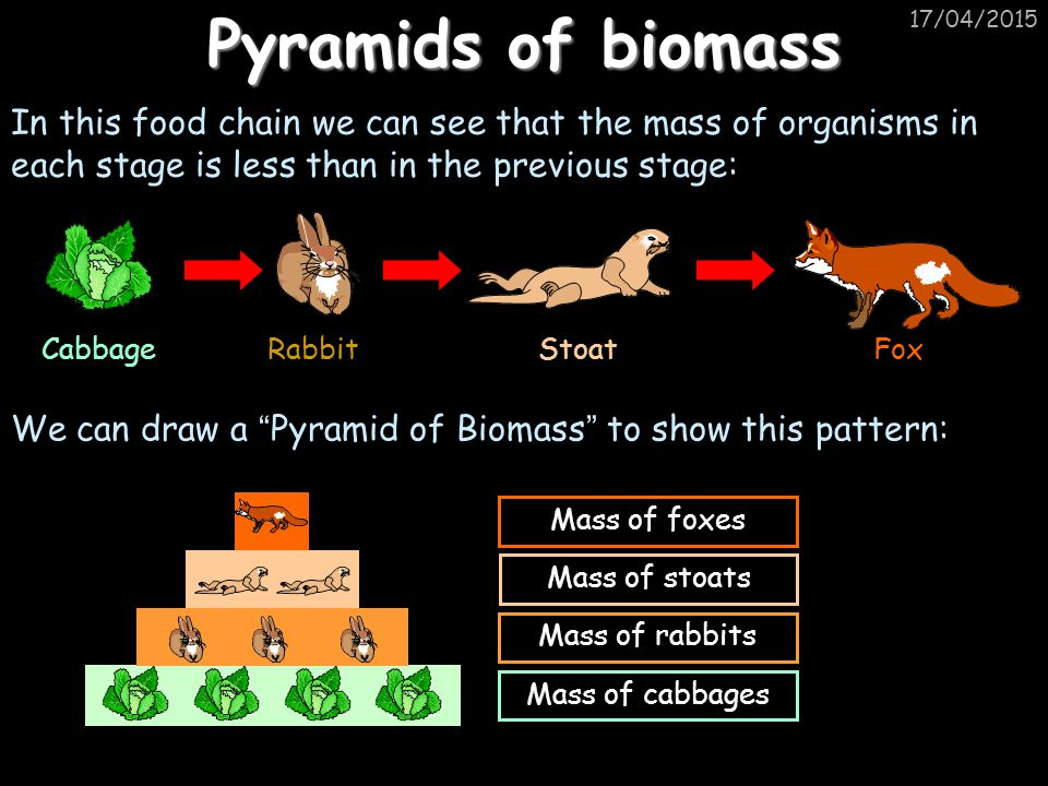 Pyramids of biomass 11/04/2017. In this food chain we can see that the mass of organisms in each stage is less than in the previous stage: