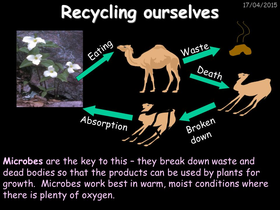 Recycling ourselves Eating Waste Death Absorption Broken down