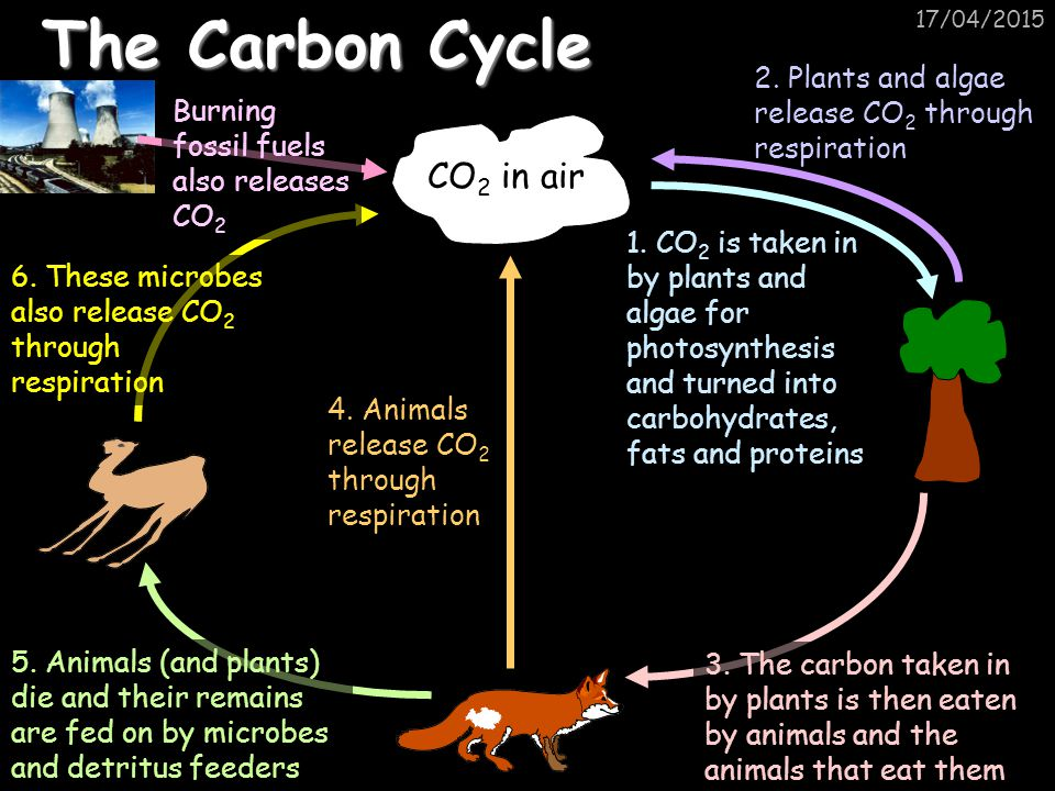The Carbon Cycle CO2 in air