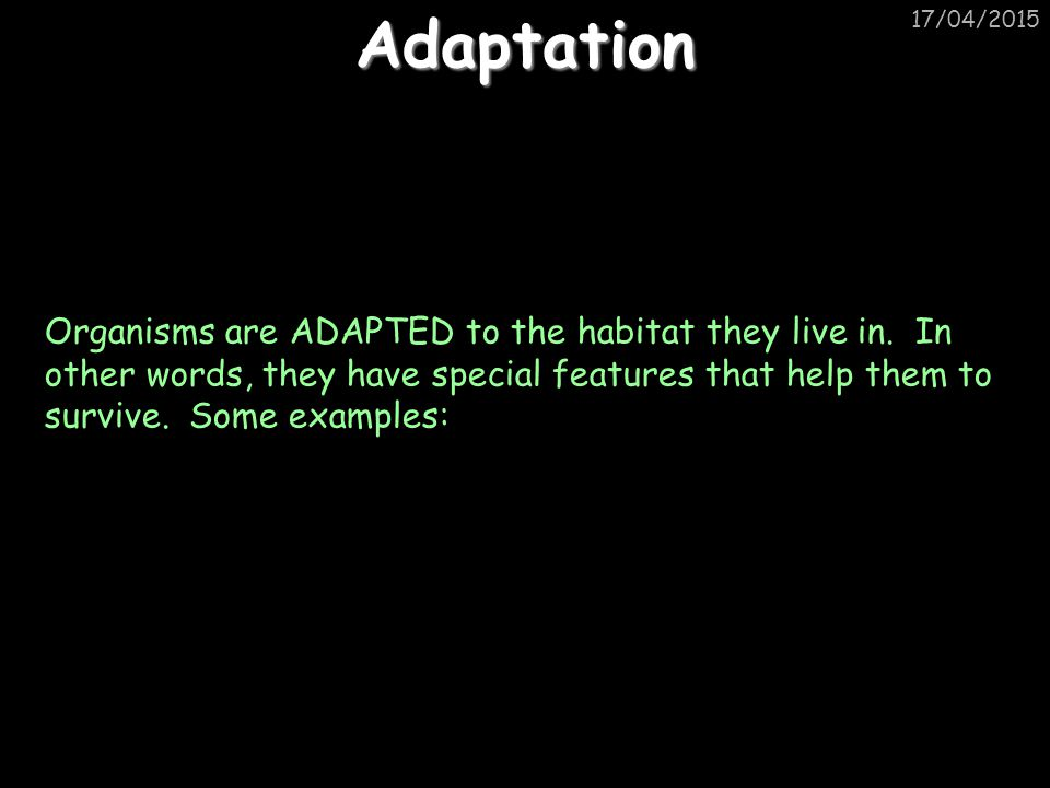Adaptation 11/04/2017.