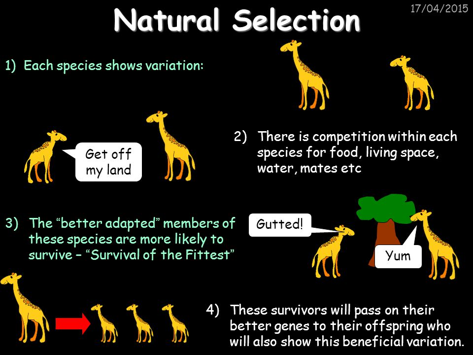 Natural Selection 1) Each species shows variation: