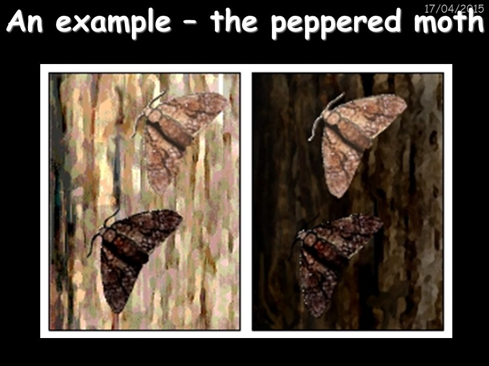 An example – the peppered moth