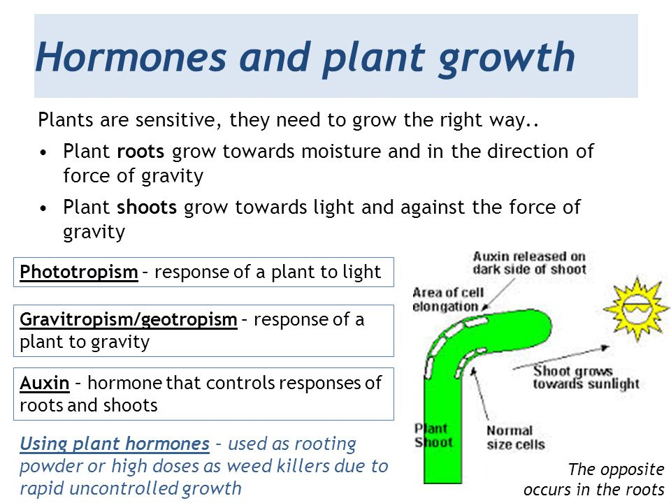 Hormones and plant growth
