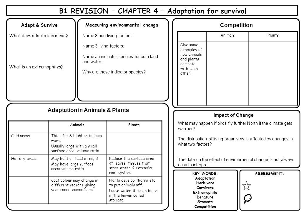 B1 REVISION – CHAPTER 4 – Adaptation for survival