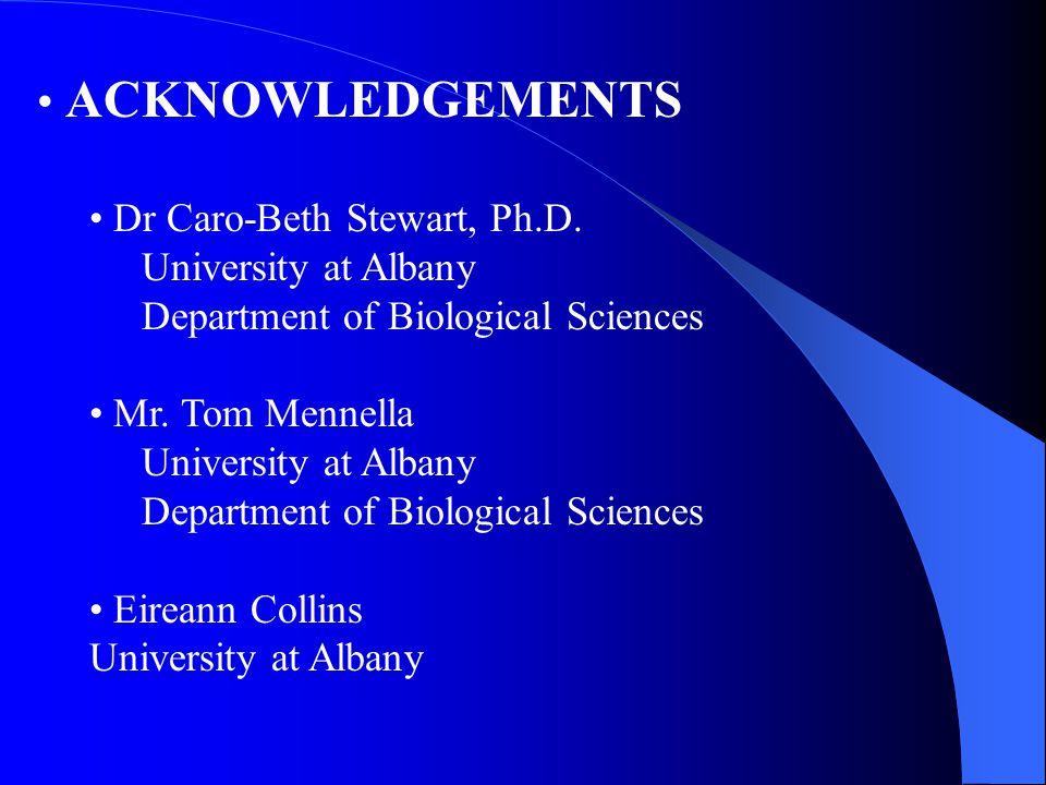 ACKNOWLEDGEMENTS Dr Caro-Beth Stewart, Ph.D. University at Albany