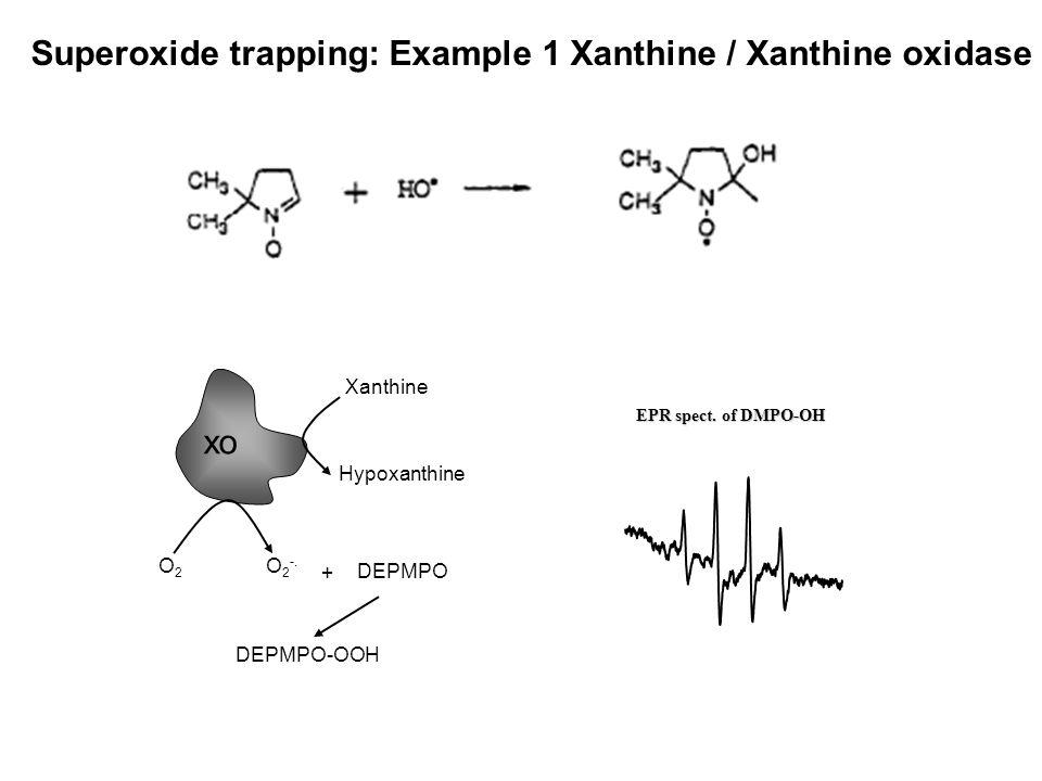 Superoxide trapping: Example 1 Xanthine / Xanthine oxidase