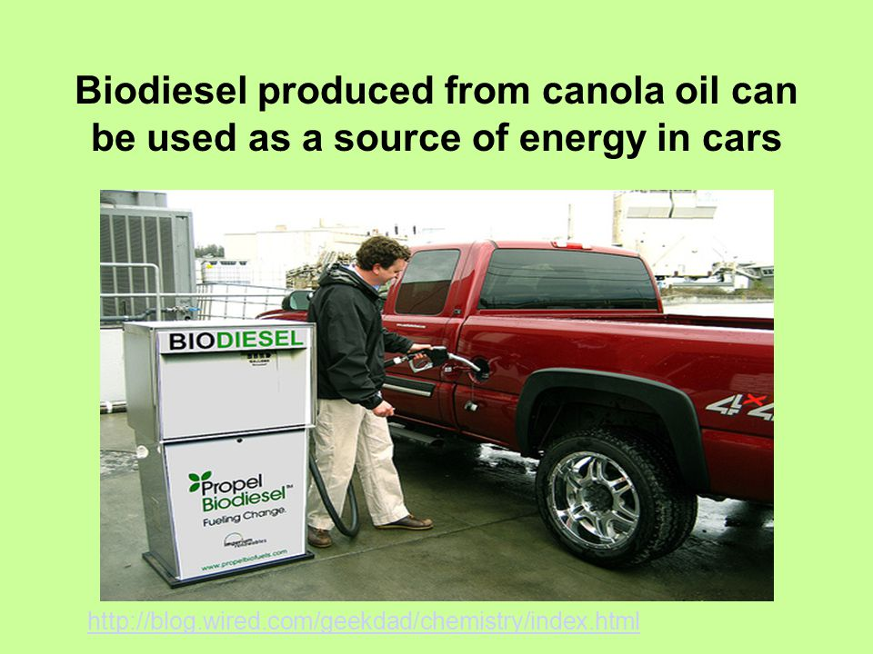 Biodiesel produced from canola oil can be used as a source of energy in cars