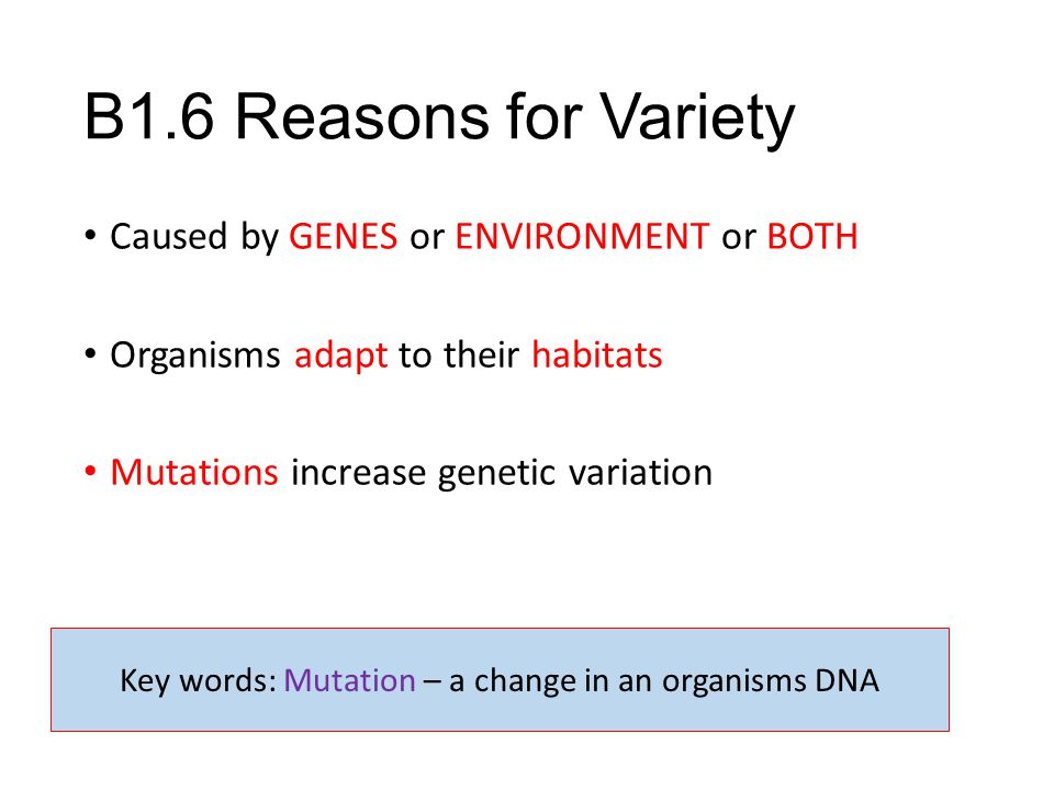 Key words: Mutation – a change in an organisms DNA