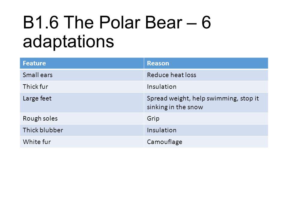 B1.6 The Polar Bear – 6 adaptations