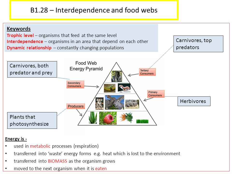 B1.28 – Interdependence and food webs