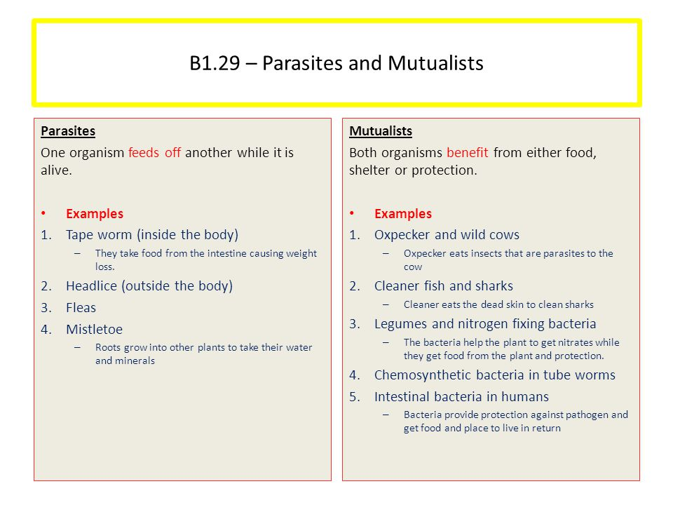B1.29 – Parasites and Mutualists