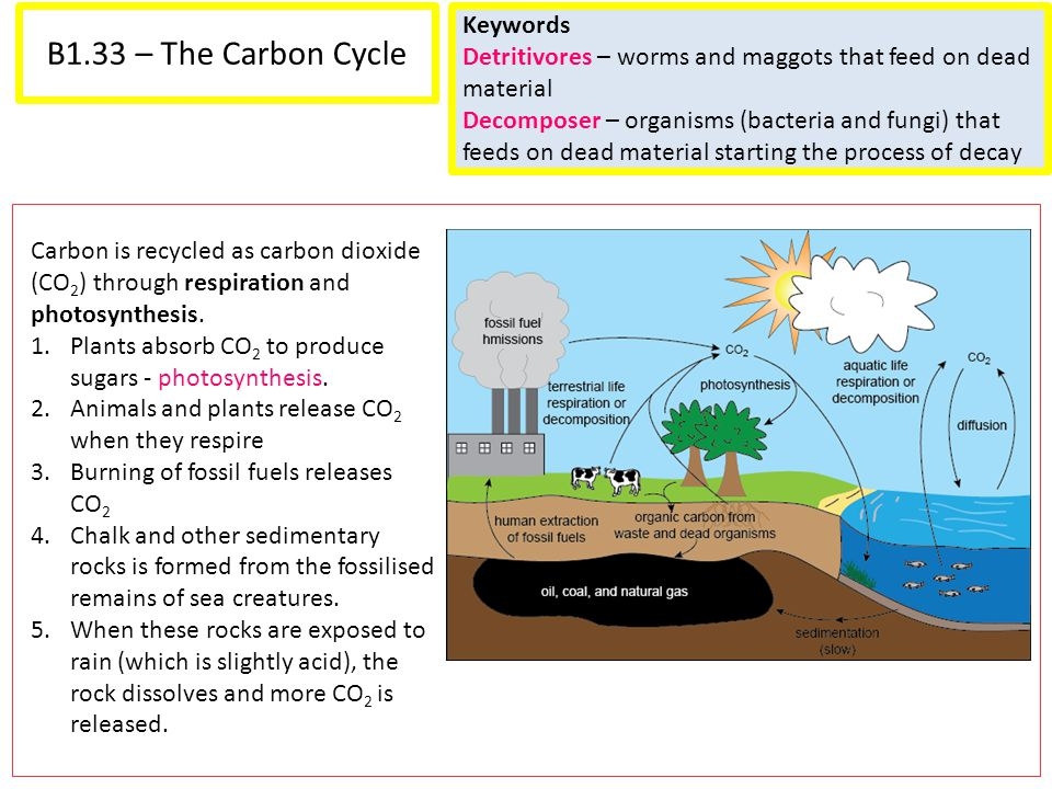 B1.33 – The Carbon Cycle