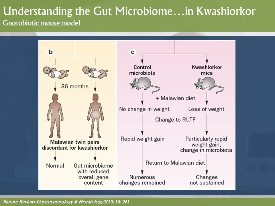 Understanding the Gut Microbiome…in Kwashiorkor Gnotobiotic mouse model
